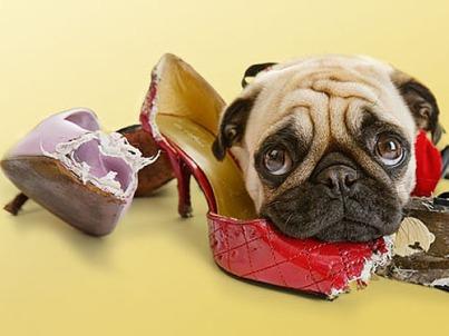 puppy.shoe.jpg