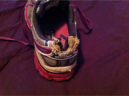 shoe.chew.jpg